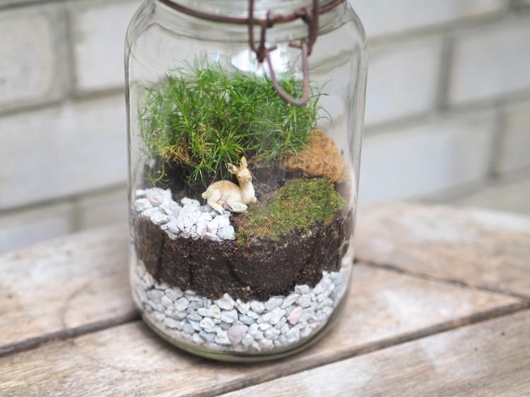 mousse terrarium good mousse naturelle escargots geants with mousse terrarium moderne. Black Bedroom Furniture Sets. Home Design Ideas