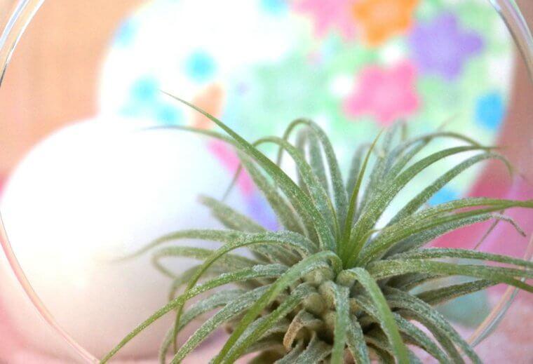 plante-grasse-saint-valentin-deco-idee-cadeau-original