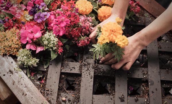 faire mur végétal idée DIY