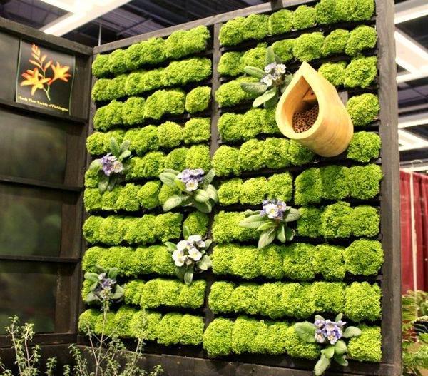 mur végétal cadre bois idée originale