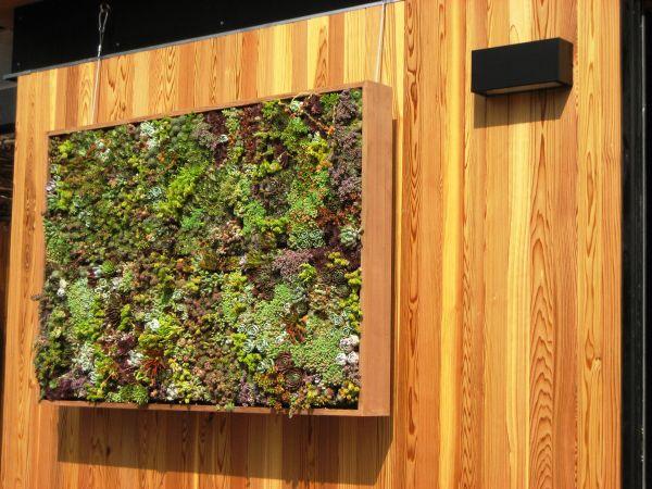 mur végétal contemporain extérieur intérieur