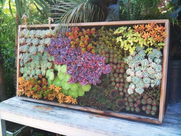mur végétal extérieur couleurs différentes