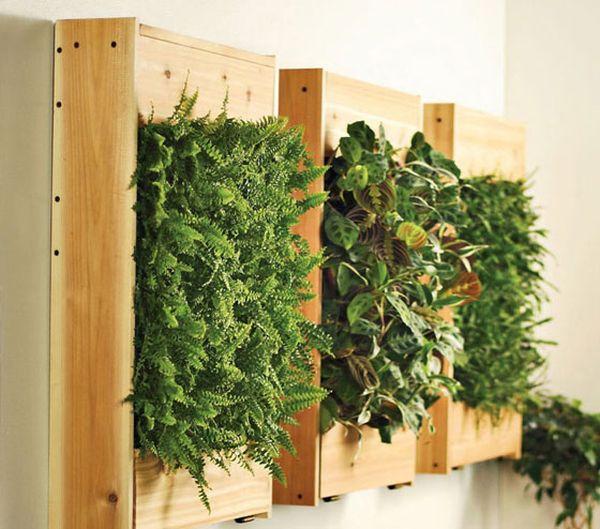 plantes intérieur caisse bois