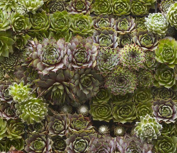 mur vert idée création DIY