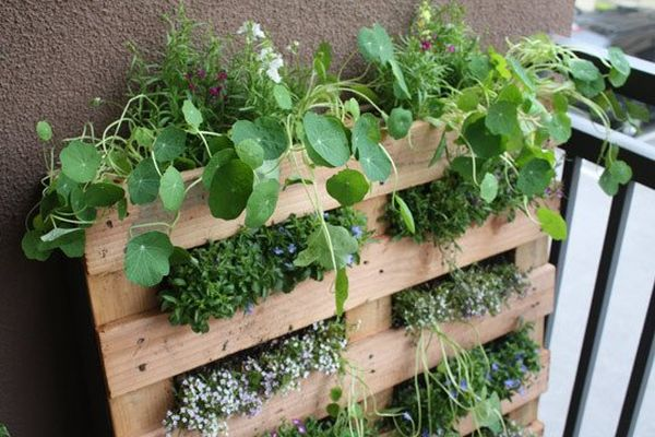 palette bois mur vegetal DIY