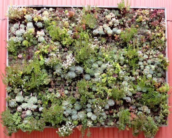 panel végétal vertical extérieur plantes