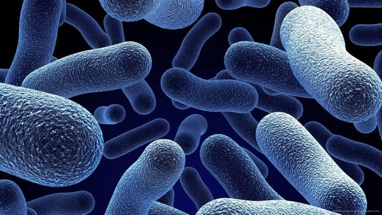 plantes-antibacteriennes-et-antifongiques