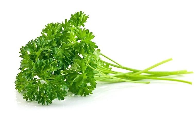 plantes-medicinales-bouquet-de-persil