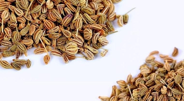 plantes-medicinales-cumin-en-graines