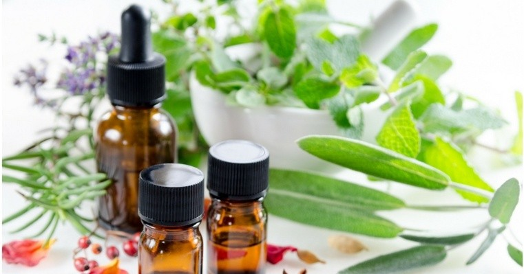 plantes médicinales dans-recipients