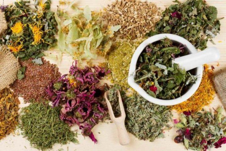 Plantes médicinales: 15 avantages impressionnants pour la santé