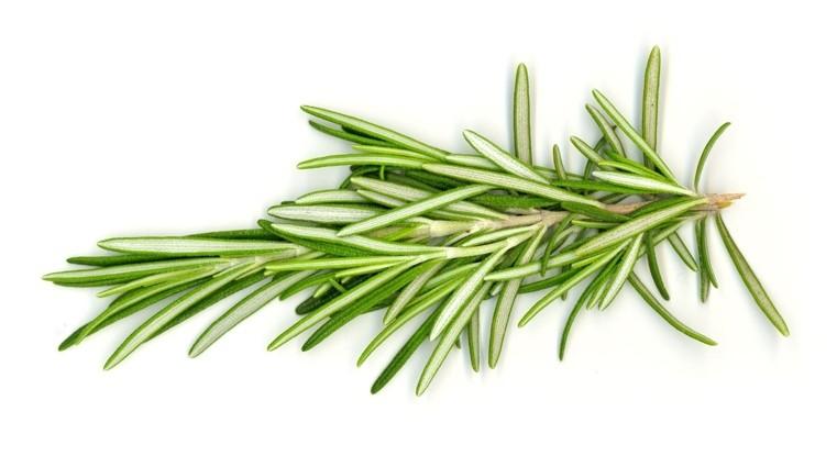 romarin-comme-plantes-medicinales