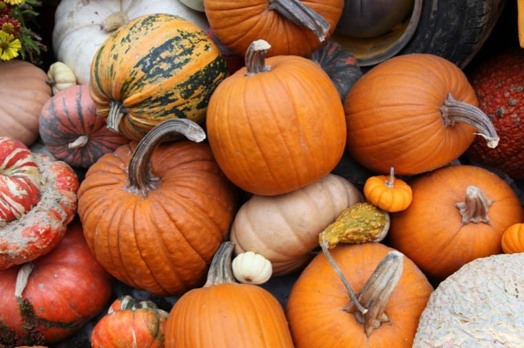 Repas-Halloween-pates-au-fromage