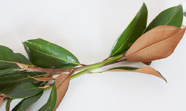 bricolage avec couronne diy feuilles d'arbre