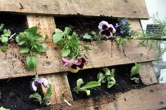 DIY jardinière en palette en 30 idées fabuleuses