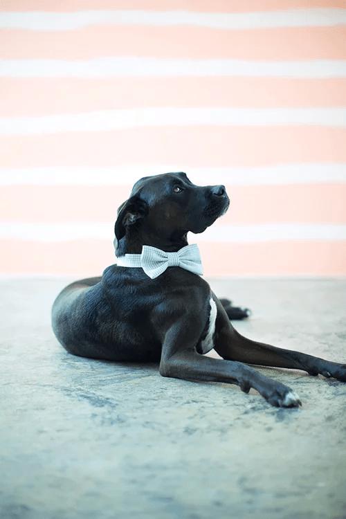 Cravate pour chien DIY