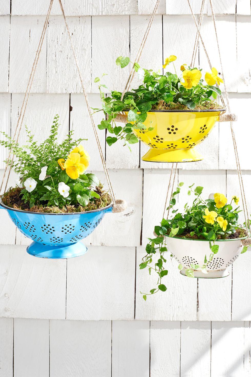 Pince à plantes