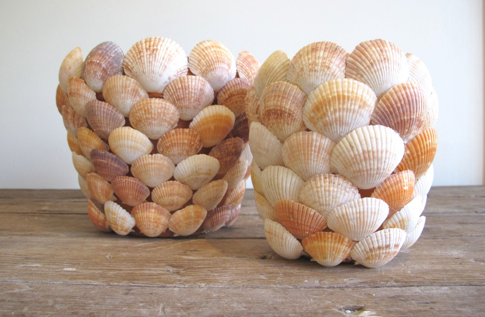 Jardinière de coquillages